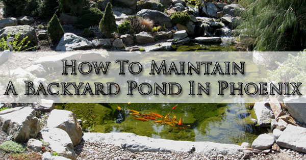 How To Maintain A Backyard Pond In Phoenix