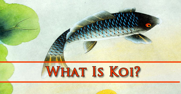 What Is Koi Phoenix AZ