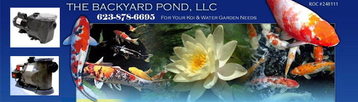 How To Keep Your Water Quality High in Water Gardens & Garden Ponds