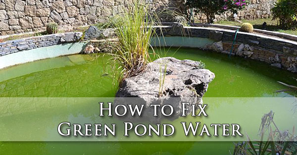 How to Fix Green Pond Water Phoenix AZ