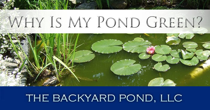 Why Is My Pond Green?