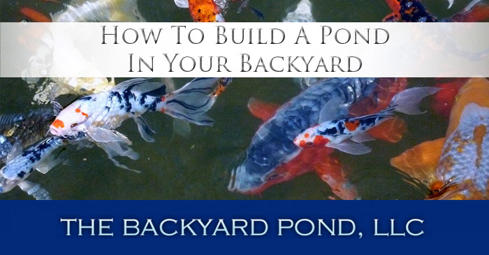 How to build a pond your backyard the backyard pond llc for Build a pond in your backyard