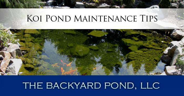 Koi pond maintenance tips the backyard pond blog for Backyard pond maintenance