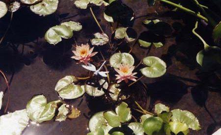 plant05