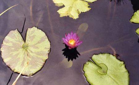 plant08